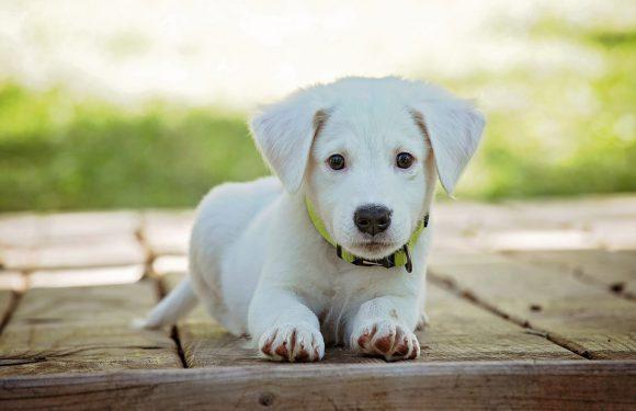 Elegancki, piękny pies