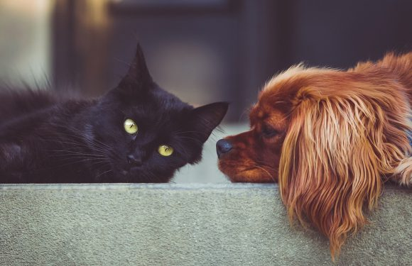Szczególne dbanie o psiaka z długą sierścią